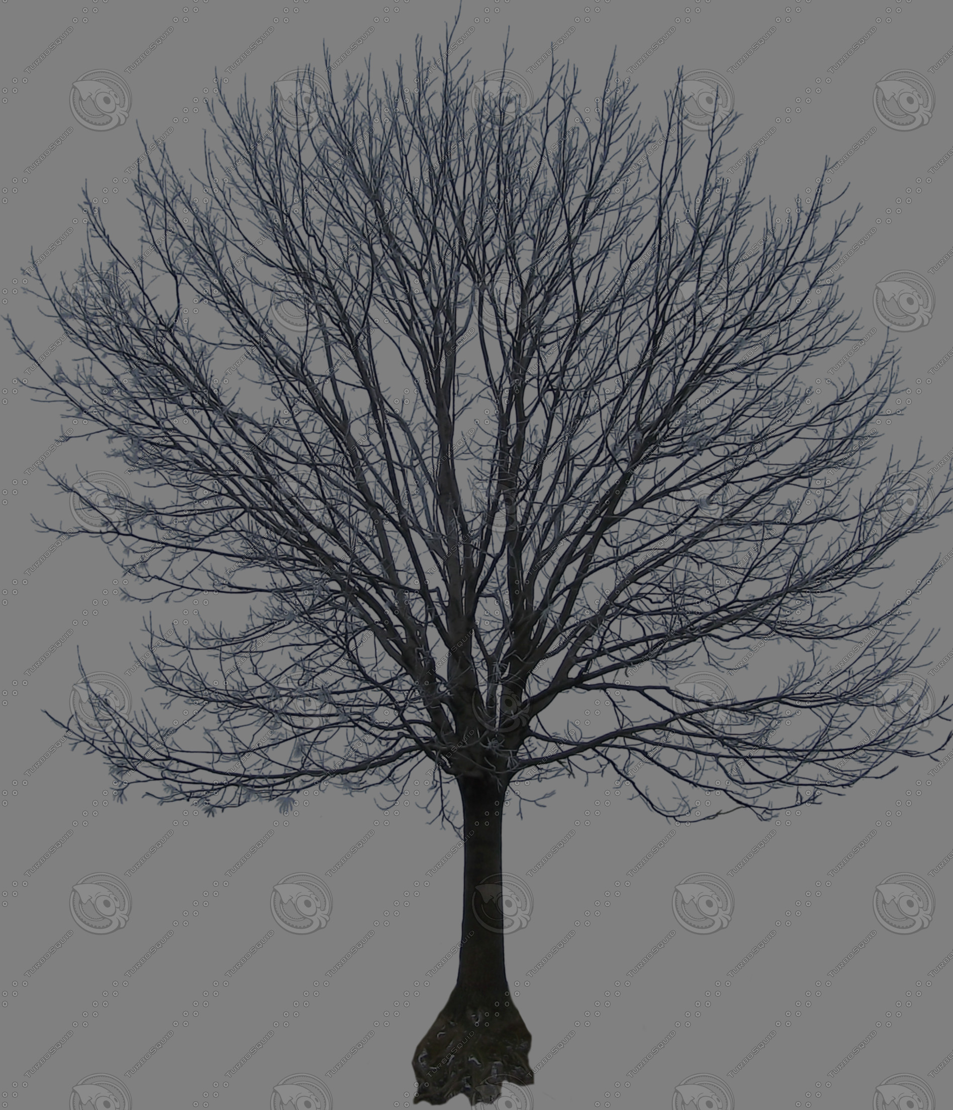 tree50.png