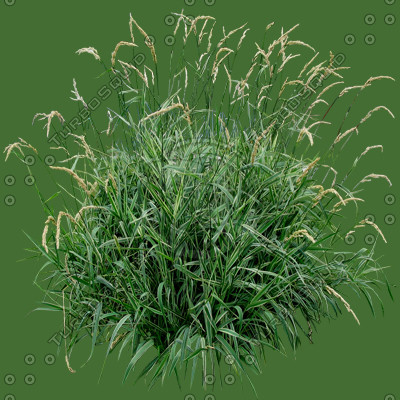 Grass_09.tga