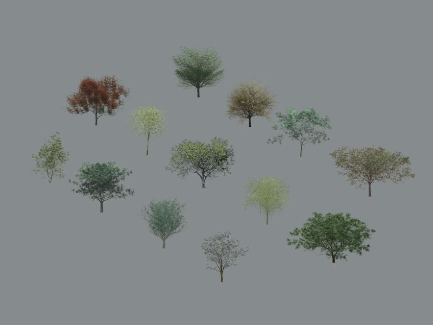 Tree-Deciduous_Render.jpg