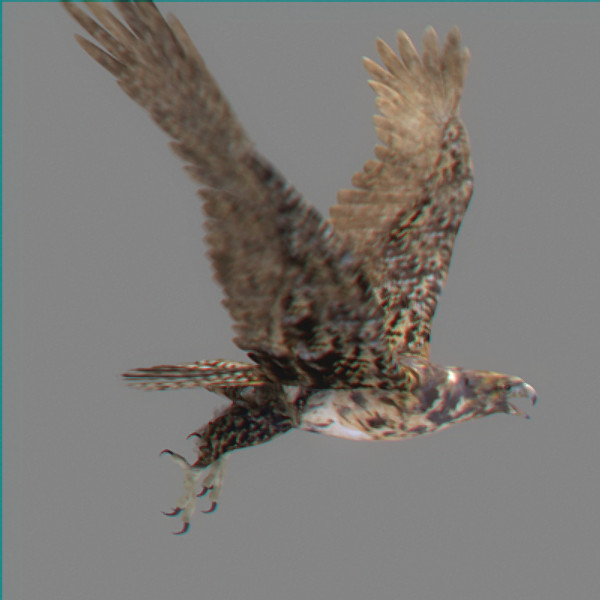 hawk eagle 3d obj - Animated Hawk... by NONECG