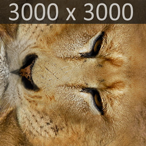 3ds max lion fur - Animated Lion... by NONECG