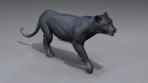 panther animation 3d model - Animated Panther... by NONECG