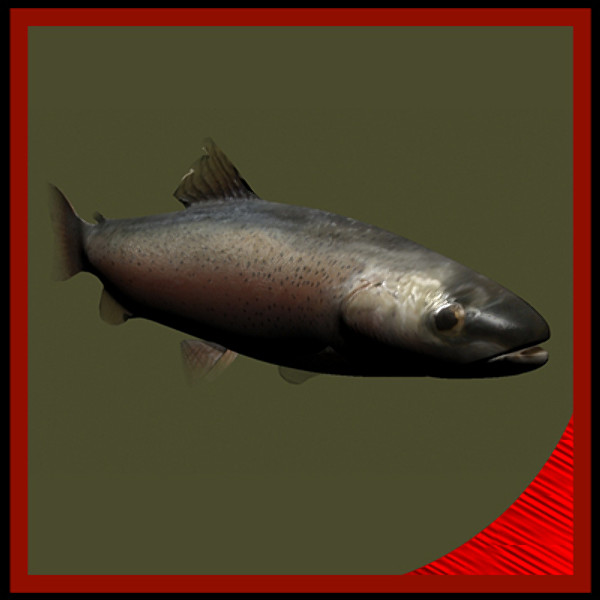 3d rainbow trout underwater fish model - Rainbow Trout fish... by gauthier12