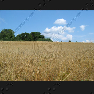 nature - field (1042)